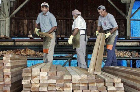 Trump slaps tariff on Canadian softwood lumber